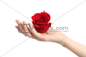 Beautiful woman hand holding a red rose