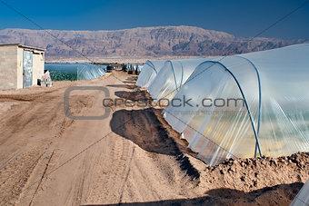 Greenhouses in the Dead Sea.