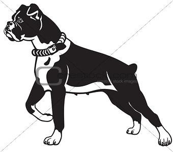 boxer black white