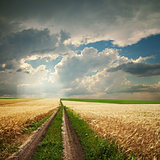 road in golden agricultural field under dramatic clouds