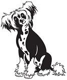 chinese crested dog black white