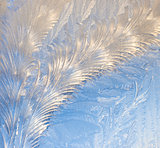 Feather patterns in window frost