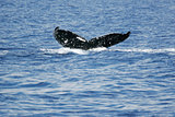 Tail of Whale