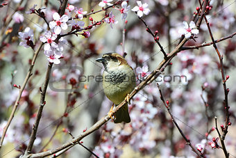 Sparrow in flowers
