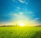Rice field plantation and city