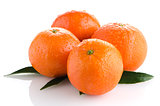 Ripe tangerines or mandarin