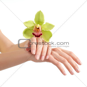 Beautiful woman hands with manicure and a green orchid