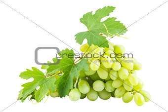 Ripe green grapes