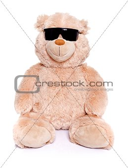 Teddy bear with sunglasses