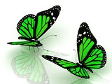 Two charming green butterflies