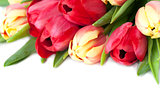 Red and yellow tulips border