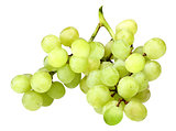 Branch of fresh green grape