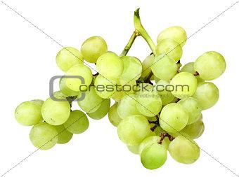 Branch of fresh green grape