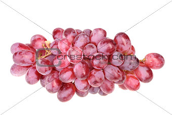 Branch of fresh purple grape