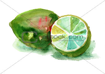 Watercolor illustration of Limes