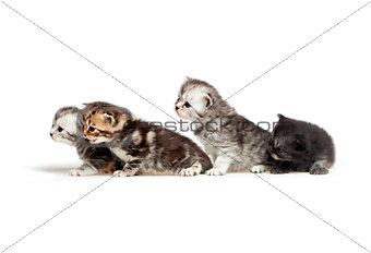 Six little kitten