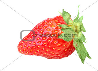 One red berry of fresh strawberry