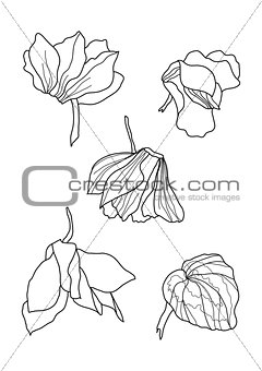cyclamens pen drawing collection