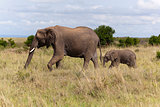 Elephants