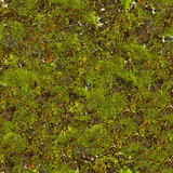 Moss Seamless Texture.