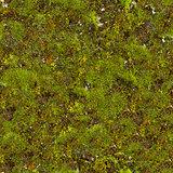 Moss Seamless Texture.