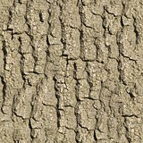 Old Oak Bark. Seamless Texture.