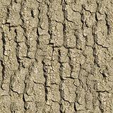 Old Oak Bark. Seamless Texture.