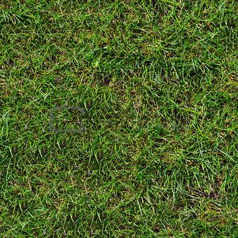 Green Grass. Seamless Texture.