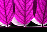Abstract lilac leaves background