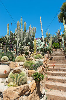 Garden of exotic plants Pallanca