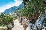 Garden cacti and succulents in Monaco