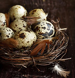 Quail eggs.