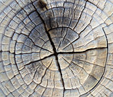 Closeup of Old Pine Saw Cut.