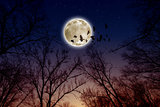 Full moon, ravens