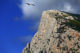 Summer rocks and seagull flying in blue sky