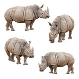 Set of Rhinoceros Isolated on a White Background