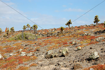 Rocky terrain in the Galapagos Islands