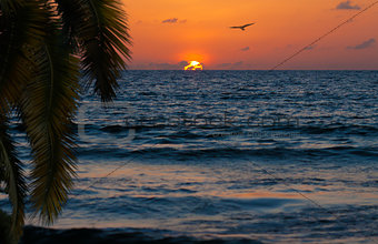 Beautiful sunset om ocean shore