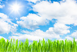 fresh grass growth on cloud sky background