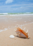 nice seashell on the beach sand 