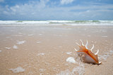 seashell on the sand of seashore