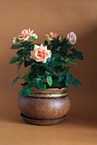 Rose In Flowerpot