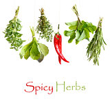 Spicy herbs.
