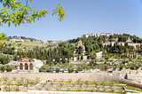 Mount of Olive, Jerusalem