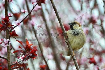 Disheveled little sparrow