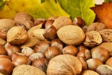 Nuts and autumn leaves
