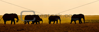 Group of Elephants seen backlit