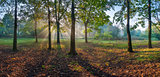 Panorama of the oak wood