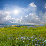 Blue flower meadow and clouds