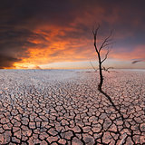 Dry tree on dry earth